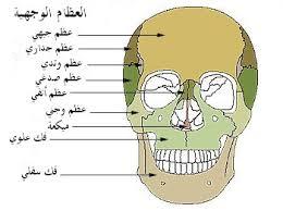 دراسة: عظم الوجه يشيخ مثل الجلد والأنسجة
