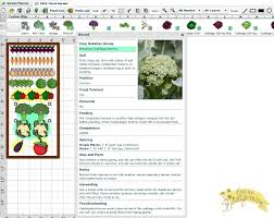 companion vegetable garden layout my first ever garden what to plant
