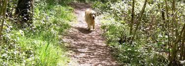 Cottages To Rent Dog Friendly by Monmouthshire Cottages Self Catering Accommodation