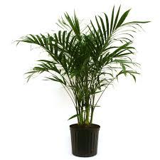 Best Office Desk Plants Indoor Plants Garden Plants U0026 Flowers The Home Depot