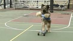 Cão ciclista vira celebridade da TV nos EUA - BBC Brasil - Notícias