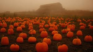 halloween pumpkin wallpapers fields farm patch spooky field halloween pumpkin fog pumpkins