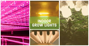best lights for growing weed indoors cannabistutorials com