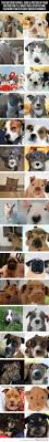 1378 best love our hounds images on pinterest animals dog mom
