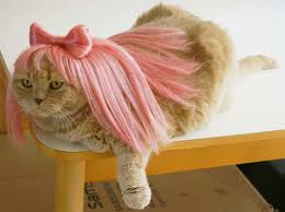 Kitten Costumes Halloween Cat Costumes U0026 Funny Wigs Designer Pet Costumes