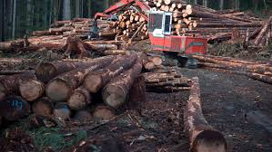 U S  Lumber Coalition files petition  restarting Canada U S      CBC