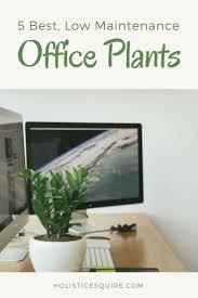 Best Office Desk Plants The 25 Best Best Office Plants Ideas On Pinterest Best Plants