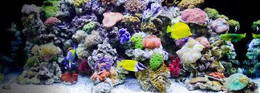 amazon com fish u0026 aquatic pets pet supplies aquarium dã cor