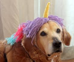 Dog Costumes Halloween Etsy Place Buy Sell Handmade