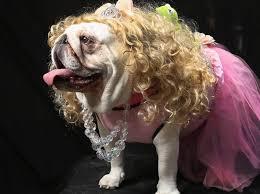 Dog Costumes Halloween 101 Pet Costumes Images Animals Pet Costumes