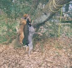 training a bluetick coonhound to hunt list of hunting dog breeds