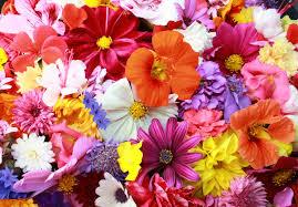 cute floral print dresses lilyboutique