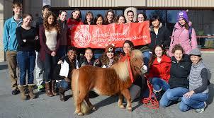 Letter of Recommendation Personal Statement Secrets Santa Rosa Arabian Horse Show