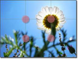 external image images?q=tbn:ANd9GcTXaS18AEUVTgZq3790L9k7ezrcNSArjIc0WVwNpW-a46M5ag4C