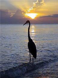 Bird standing on log in water
