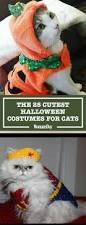 cat halloween 30 pet cat halloween costumes 2017 cute ideas for cat costumes