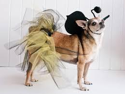 18 diy pet costumes for halloween hgtv