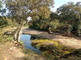 Bamar River