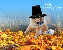 free funny thanksgiving pictures free thanksgiving computer wallpaper backgrounds wallpapersafari