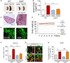 frontiers cathepsin s is involved in th17 differentiation