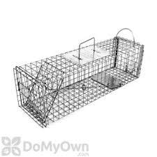 How Do You Get Rid Of Possums In The Backyard by How To Get Rid Of Possums Getting Rid Of Possums Possum Remova