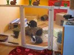 inside rabbits the big rabbit hutch