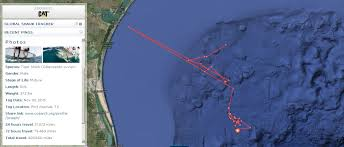 Florida Shark Attack Map by Ocearch Completing Expedition In Gulf Of Mexico Tracking Sharks