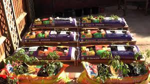 creative recycle growbags for indoor vegetable gardening in pots