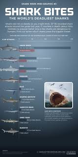Florida Shark Attack Map by 41 Best Shark Week Images On Pinterest Shark Attacks Shark Week