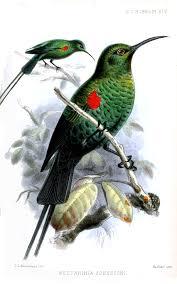 Scarlet-tufted sunbird