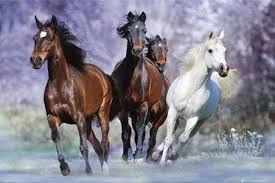 Mis amores los caballos Images?q=tbn:ANd9GcTdFBnfmgdaP9mLS3DOGOCMdEI0zTY5pqLqXE8aaKXr81JreY7GrQ