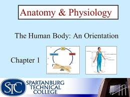 Anatomy And Physiology Chapter 1 Review Answers Chapter 1 The Human Body An Orientation Ppt Video Online Download
