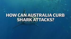Shark attack  Don     t tell mum  Cooper Allen says after great white     Daily Telegraph