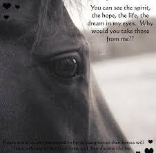 Beautiful Horses.