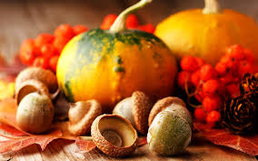 free funny thanksgiving pictures download free cute thanksgiving background pixelstalk net