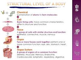 Structure Of Human Anatomy Introduction To Human Anatomy