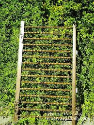 15 inspiring diy garden trellis ideas for growing climbing plants