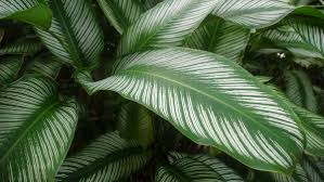 homelife top 15 indoor plants