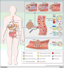 emerging role of micrornas as liquid biopsy biomarkers in