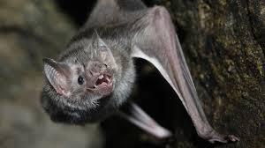 vampire fangs spirit halloween vampire bat