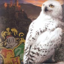 Harry Potter Images?q=tbn:ANd9GcTiidaUu_6fYUSXV30YhYe9encl4Teu63tlARazyQ-TuTdiA7fA