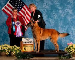 belgian sheepdog national specialty 2018 national specialty 2013 u2013 gettysburg pa u2013 abmc