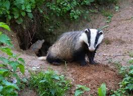 IvyClan Hunting Grounds Images?q=tbn:ANd9GcTjxFi3IYQ33jckkfYZyqLJs5WZSmNjCkmehjF7MQUVHp5jfscK