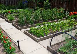 Planning A Raised Bed Vegetable Garden by 115 Best Raised Garden Beds Images On Pinterest Gardening