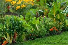it u0027s time to make your own vegetable garden
