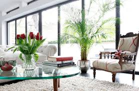 small indoor plants homedecor guide
