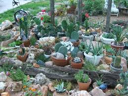 small container cactus garden design share photos gardening