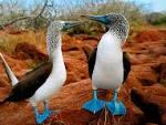 Beautiful Birds Desktop Wallpaper (wallpapers beautiful birds pictures Animals Birdies dark blue paws Desktop blogspot 1024x768)