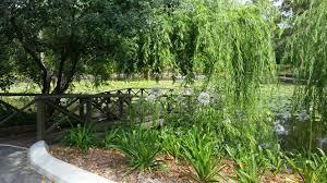 Brisbane City Botanic Gardens by Elopement Spots At Mt Coot Tha Botanical Gardens Brisbane City