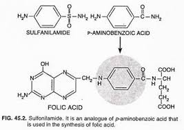 There are numerous sulfonamides that possess the same basic structure related to p aminobenzoic acid  The sulfonamides  however  differ from each other     Biology Discussion